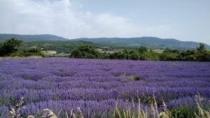 Coming soon: Provence Bike Tour