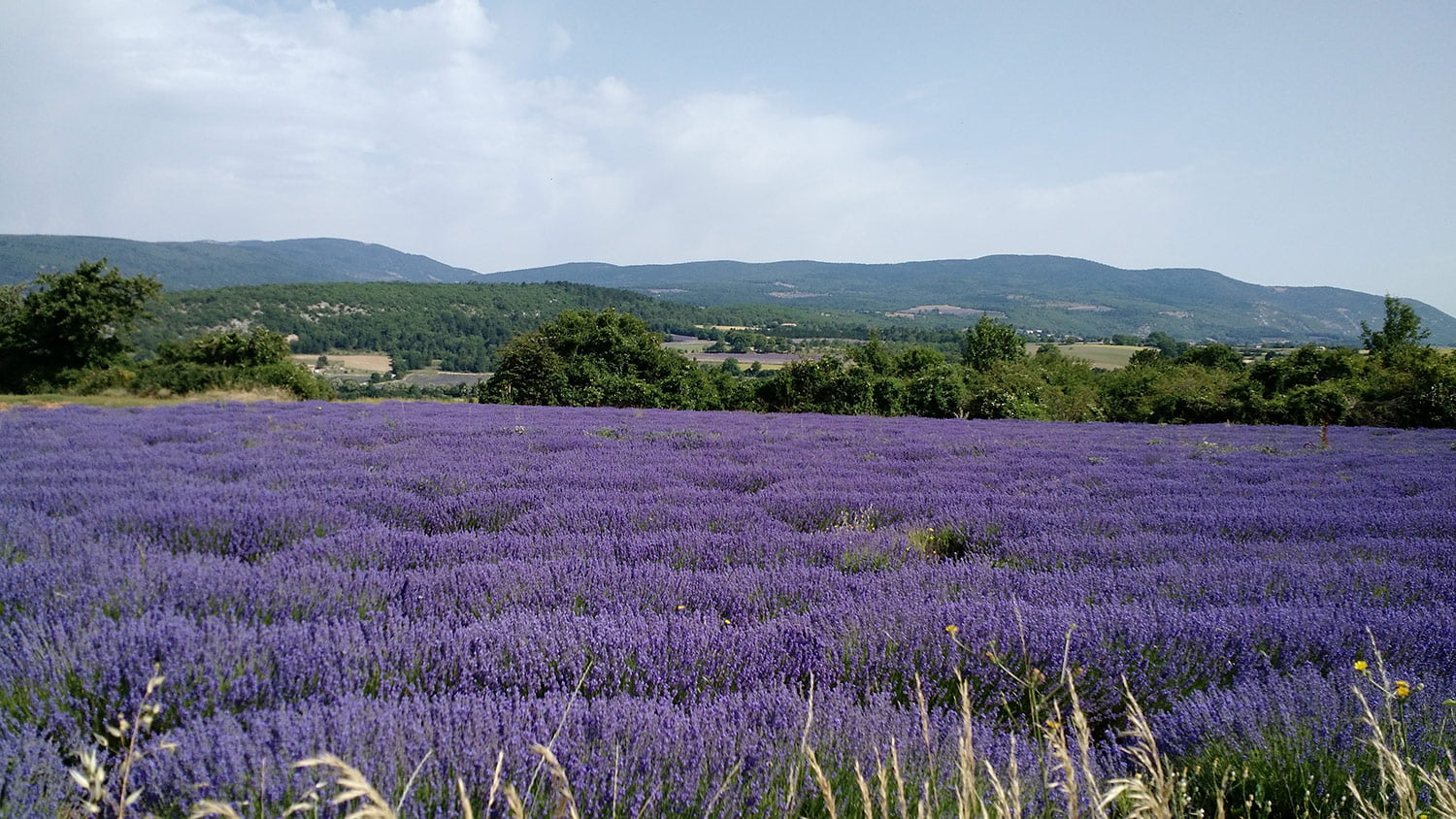 Bicycle Tours in Provence